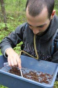 Martin Zlatkin aspirating insects from a sifter at Saint-Louis Cape in Kouchibouguac National Park
