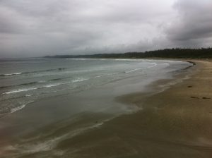 Wickanninish Beach, during one of our aquatic collection days.