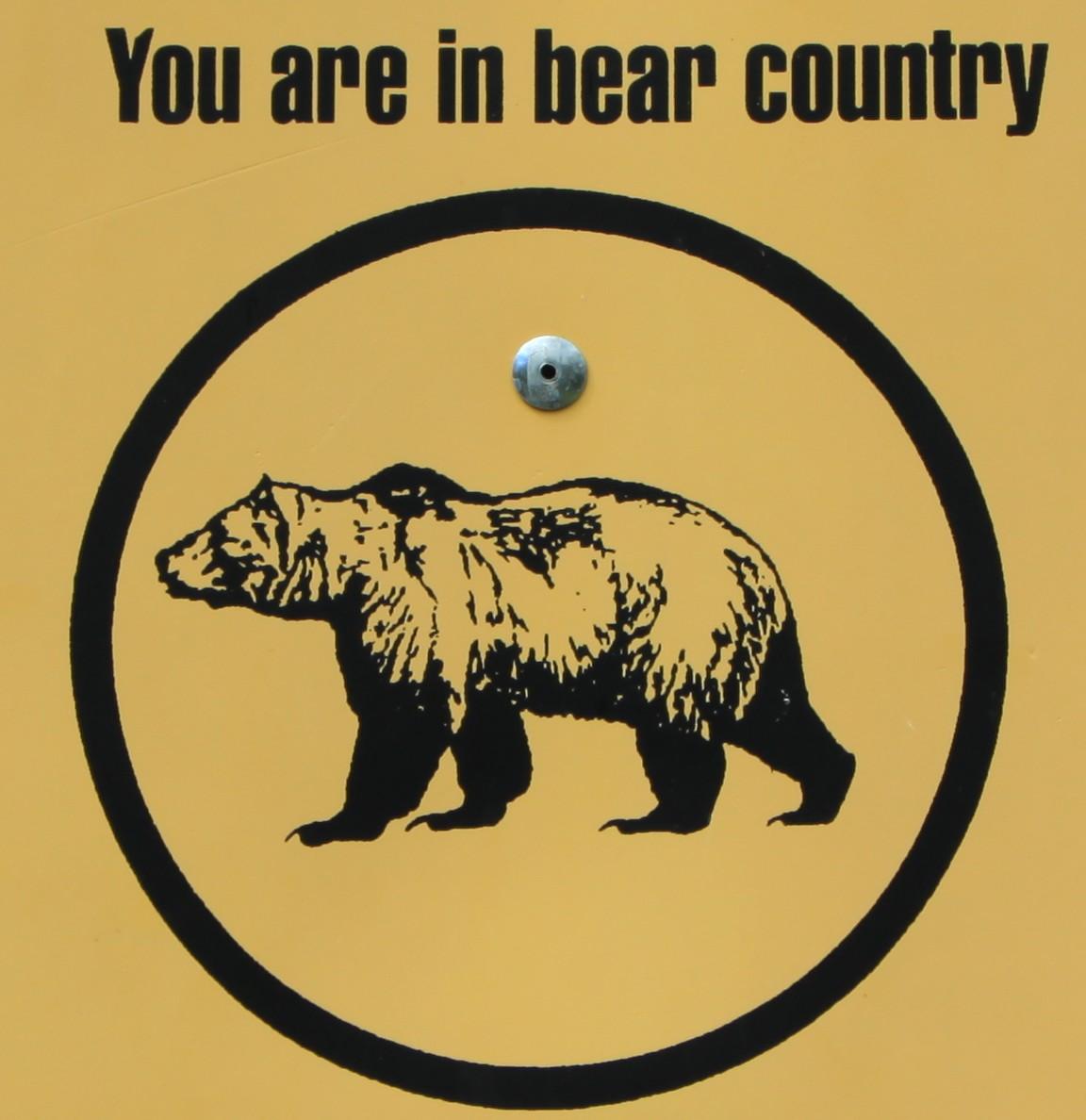 bearing bear. bearing down on the yukon bear