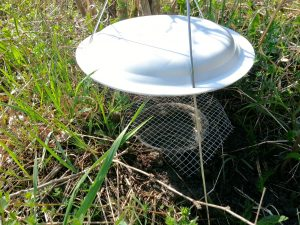 A fresh pitfall trap at rare Charitable Research Reserve