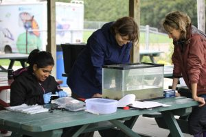Kareina D'Souza, Hope Brock and Kari Jean test non-invasive sampling on mussels from the Ausable River
