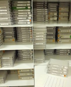 Our fluid archive cabinets are full of specimens stored in ethanol in microplates and matrix boxes.