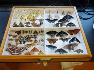 We archive our dry specimens in Cornell boxes.