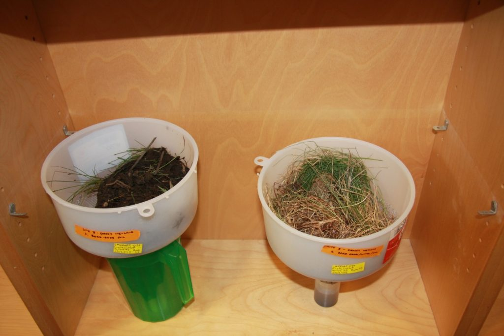 These are 2 of our berlese insect traps. The soil and grass samples are put in the top of the funnel where arthropods are captured in a plastic container at bottom of funnel
