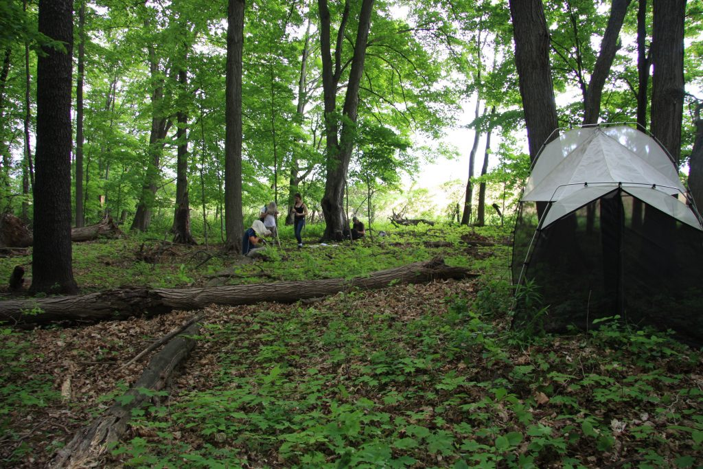 A Malaise trap in action. In the background you can see a group of wild students sifting through the insects captured in their sweep net