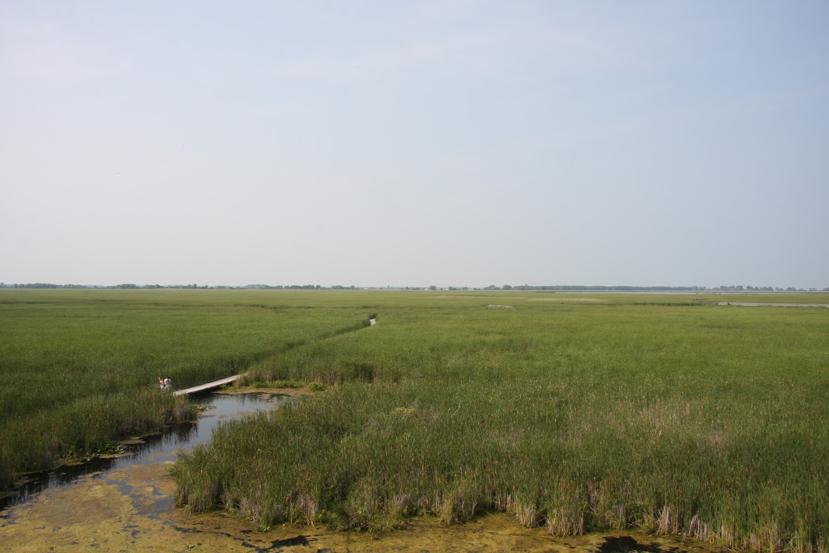 View of the marsh from the tower at the Marsh Boardwalk, Point Pelee National Park.