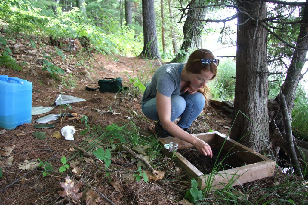 Soil invertebrate sampling at Awenda