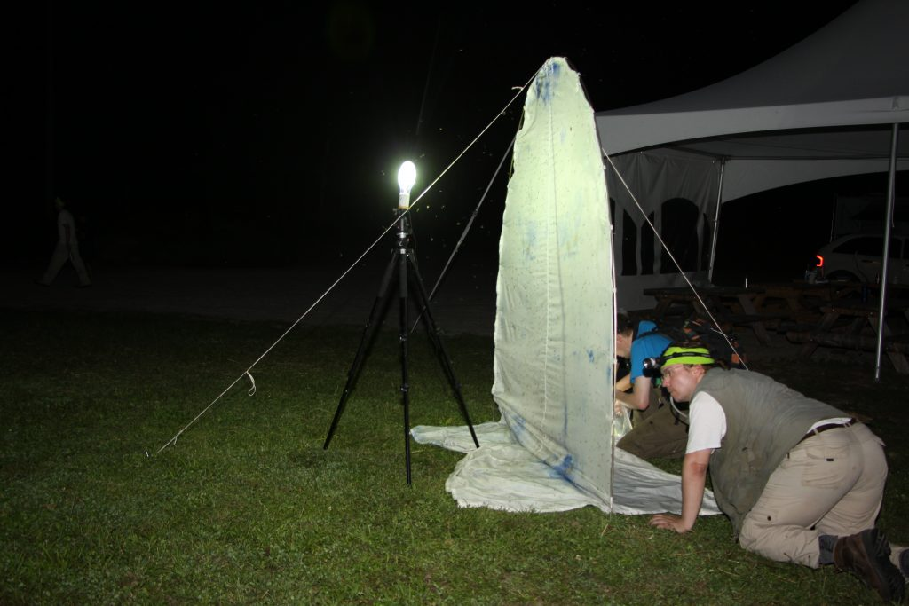 Here is Mikko Pentinsaari, a Coleopteran expert from Finland. This night sheet was set up right outside of the barn at rare