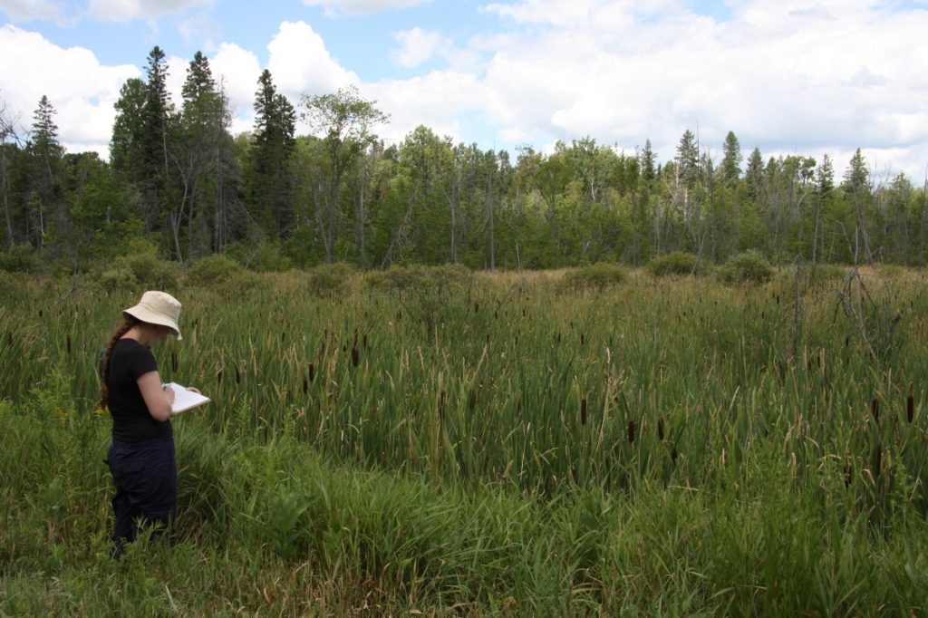 Marsh in Balsam Lake Provincial Park