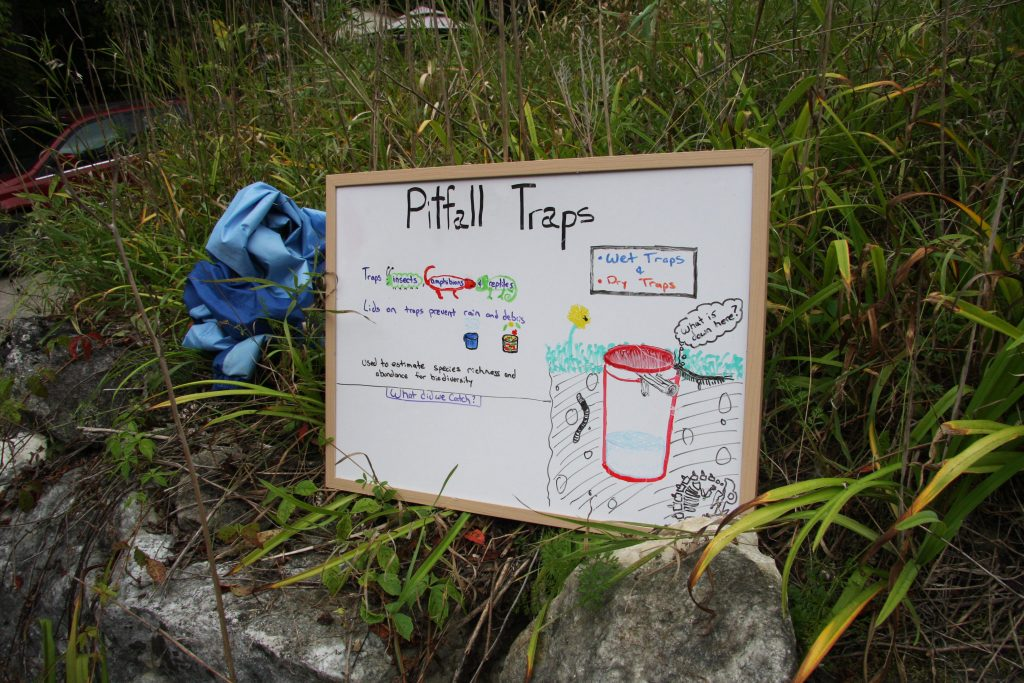 A great diagram of how a pitfall trap works