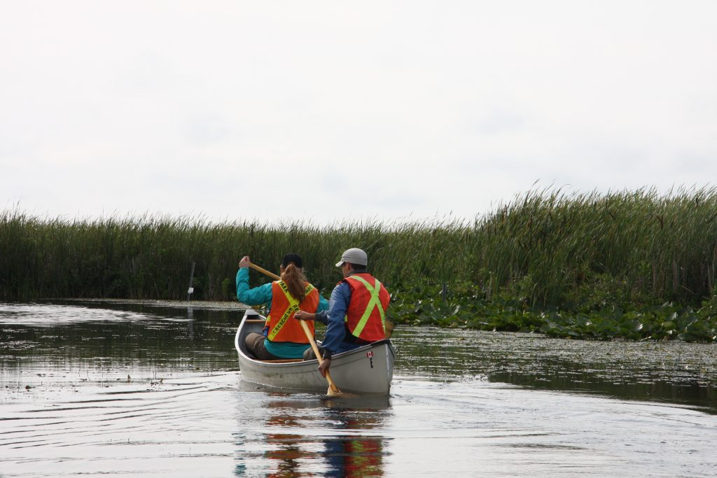 Josh and I canoeing out to collect some aquatic invertebrates in Point Pelee National Park