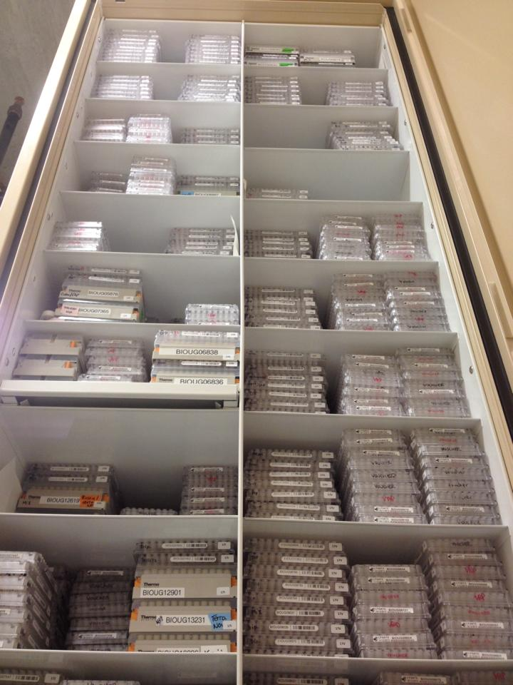 Microplates and matrix boxes stacked in the archives