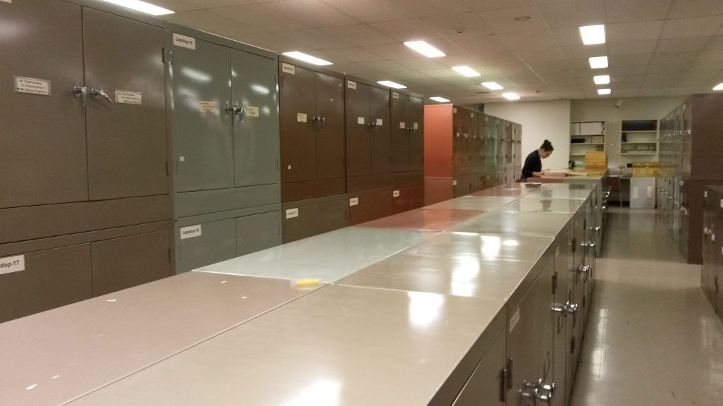 All of these cabinets (and many more!) are filled with so many cool insects! Check out Val searching for some elusive beetle species that we don't yet have on BOLD.