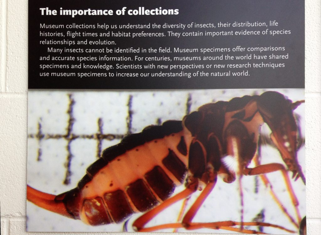 At the RBCM I found a poster talking about the importance of collections - I couldn't agree more!