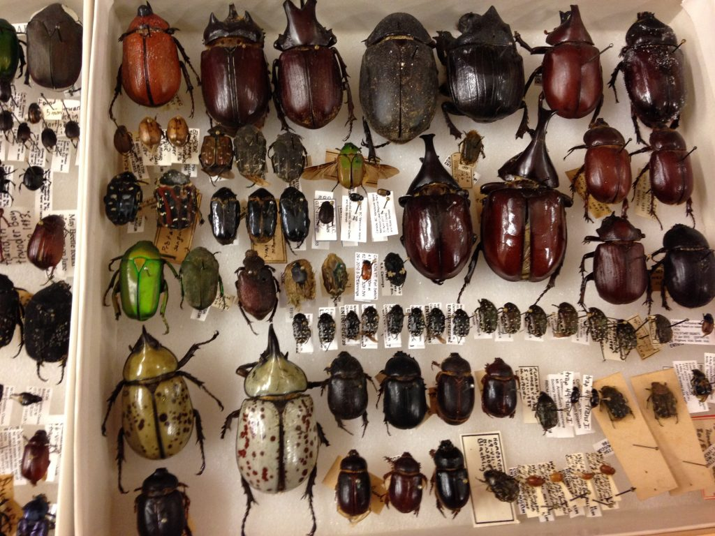 Beautiful scarab beetles... which one is your favourite?