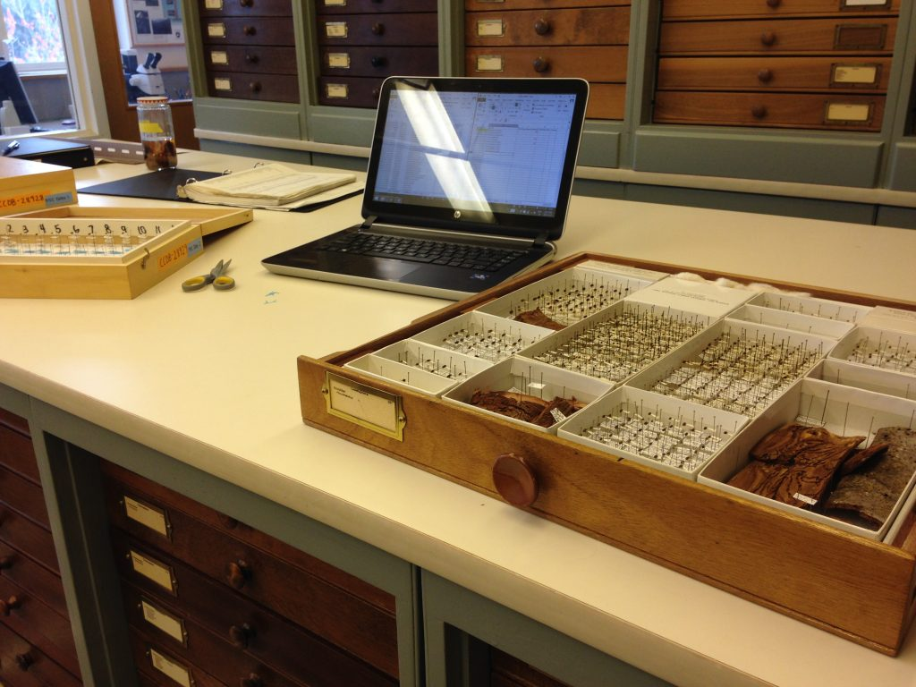 My set up at the museum. Reference list on my computer, box of identified specimens, and Schmidt box for me to bring the insects back to BIO!