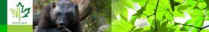 #Biodiversity150 number 6 of 150 Rainbow Sea Star