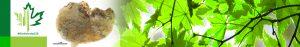 #Biodiversity150 number 38 of 150 Halisarca dujardini sponge
