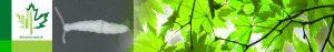 #Biodiversity150 number 39 of 150 Pseudocentipede