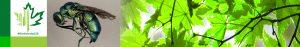 #Biodiversity150 number 33 of 150 Trichrysis doriae