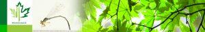 #Biodiversity150 number 50 of 150 Enallagma antennatum