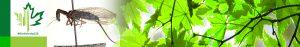 #Biodiversity150 number 58 of 150 Agulla adnexa