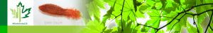 #Biodiversity150 number 60 of 150 Orange Sea Cucumber