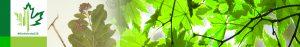 #Biodiversity150 number 85 of 150 Common Milkweed