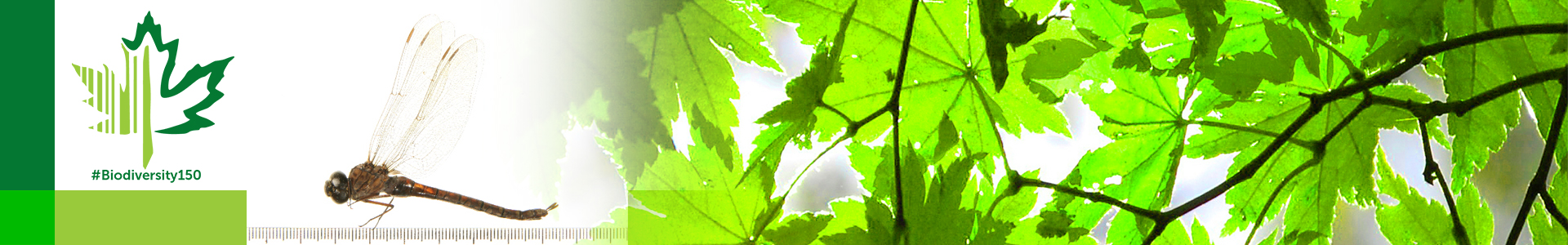 #Biodiversity150 number 94 of 150 Canada Darner